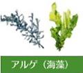 アルゲ海藻